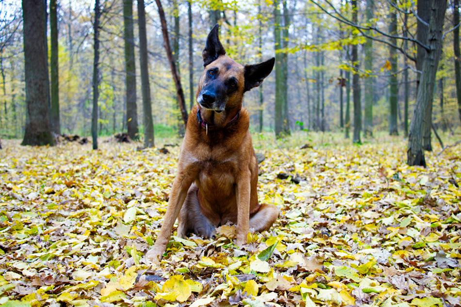 Odpowiedzialność karna pogryzienie przez psa