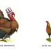 Turkey vs. Game Hen