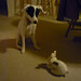 Riley and bunny 002