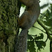 D2A_9121_squirrel.jpg