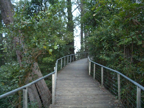 boardwalk in the blue mountains