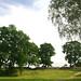 Puita linnoituksella - Trees at the fortress