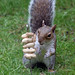 Cyril the squirrel up for a challenge 15:53:58