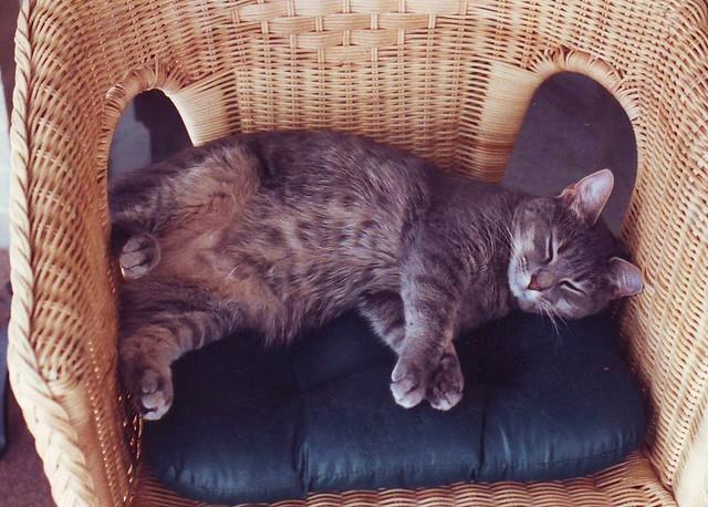 D-kitty in Wicker Chair | D-kitty (1991-2005) in the ...