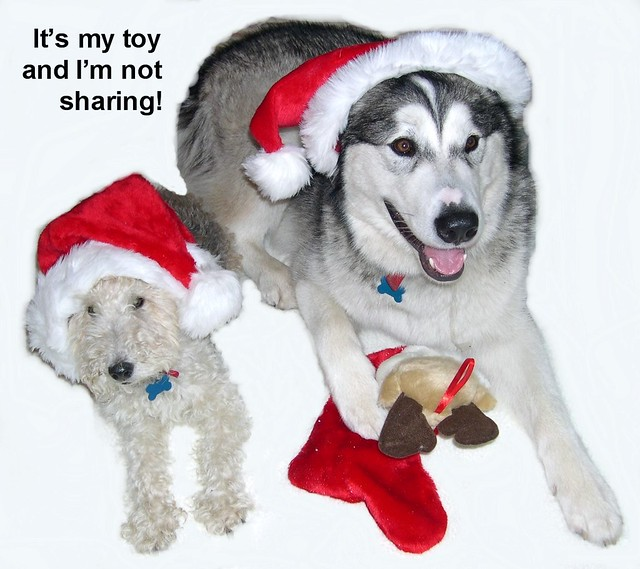 Not Sharing Toys : I am not sharing the toy dogtoon cartoon devised