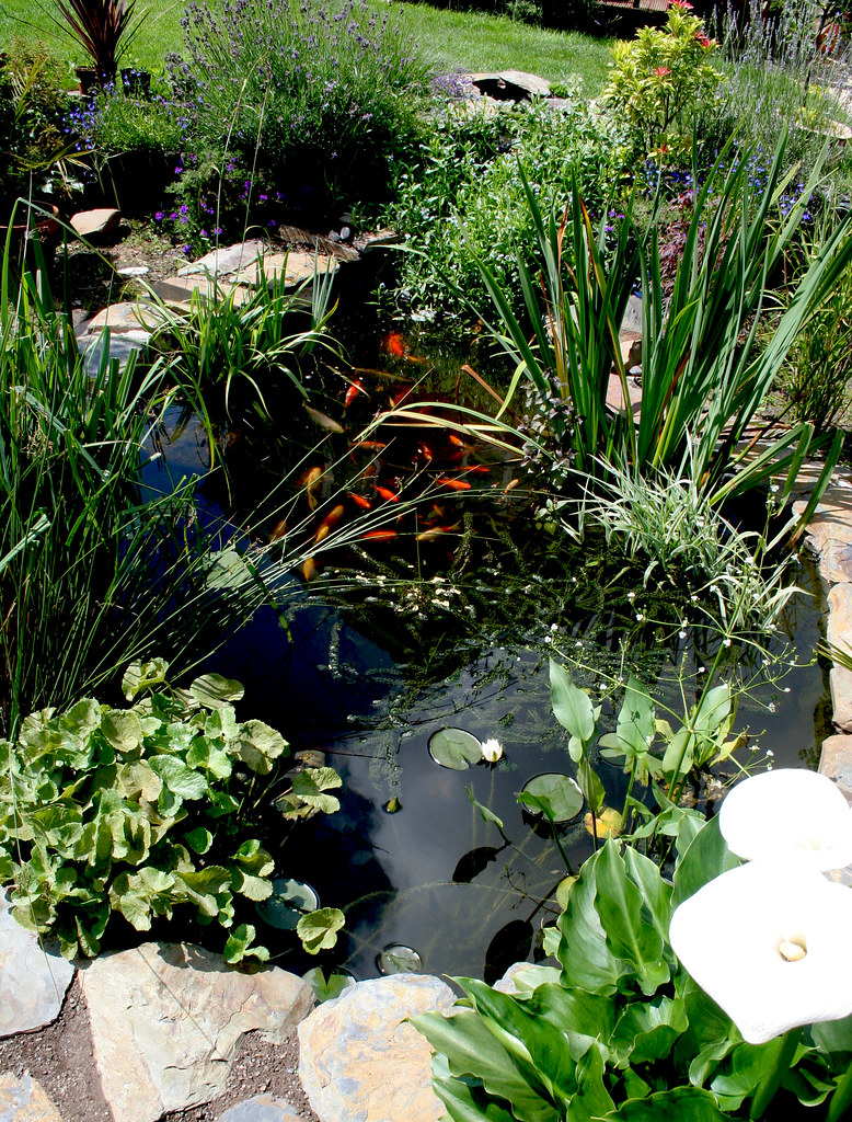 My garden pond 1 here is a wide angle shot of my little for Nice koi fish pond