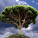 Baobab on the Planet of the Little Prince
