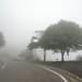 Mt. Hiei in the mist