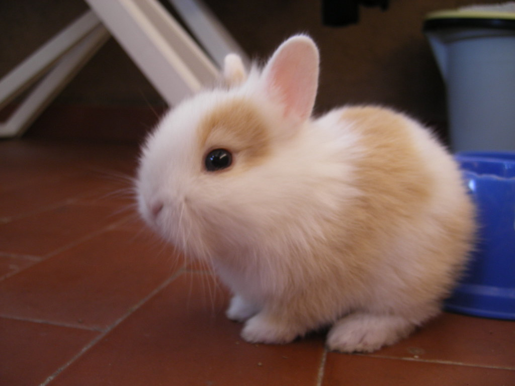 sweet rabbit puppy [ClickLinkBelow] | >>> Check out its ...