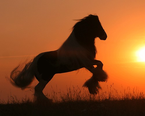 wild horses in the sunset