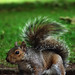 #185 Squirrel