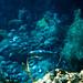 1966 Disneyland Slide Submarine Voyage Underwater View