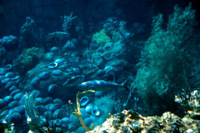 1966 disneyland slide submarine voyage underwater view flickr