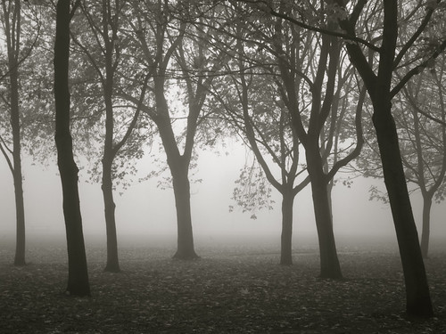 Foggy Regents Park | by davehodg