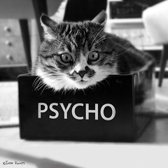 Psycho kitty | by moggierocket