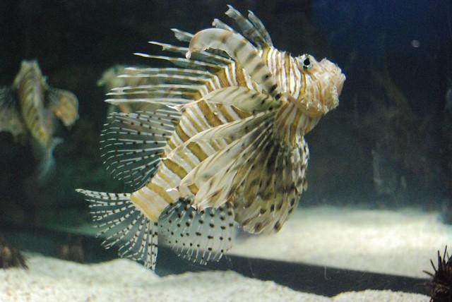 Same Cool-Looking Fish | John O'Brien | Flickr