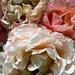 full of roses / 1