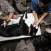 Military working dog gets dental work in Afghanistan