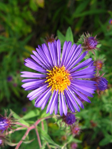Pretty purple flowerweed flickr photo sharing photo mightylinksfo