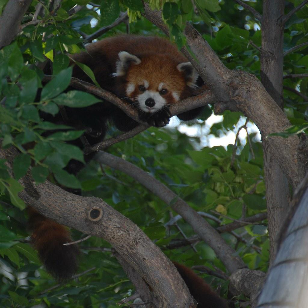 New Panda Chinese Food Latham Ny