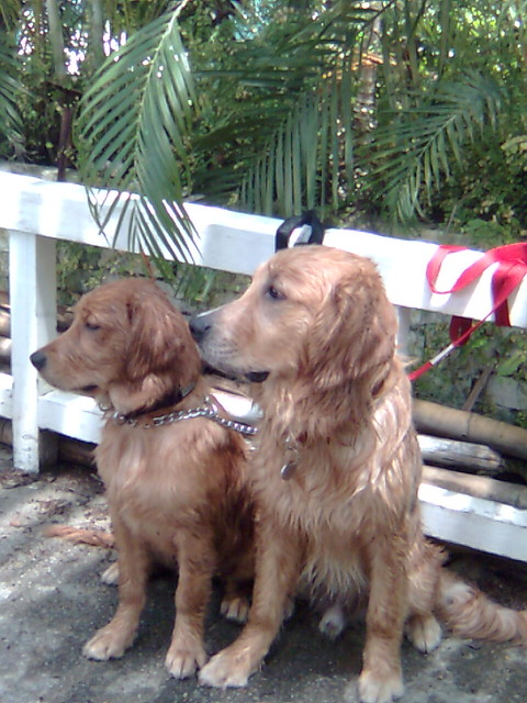 Wet Puppies Jade Mozart After Their Outing At Sentosa J Flickr