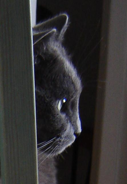 Nestor de Burma, cat