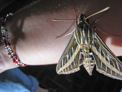 Day 162--Moth | by dieselbug2007