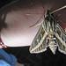 Day 162--Moth