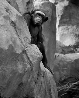hill w zoo-142.jpg | by warhill