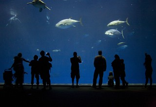 Monterey Bay Aquarium's Outer Bay exhibit | by Anne Canright (tsallam)