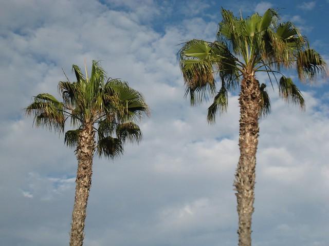 La jolla palm trees flickr photo sharing for Tattoo la jolla