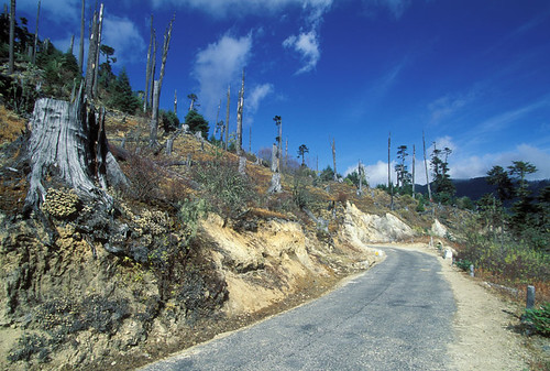 Road leading through forest | by World Bank Photo Collection