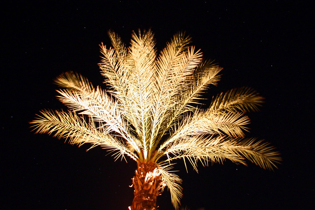Palm Tree Wedding Cake Topper