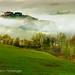 Nella nebbia Toscana 2