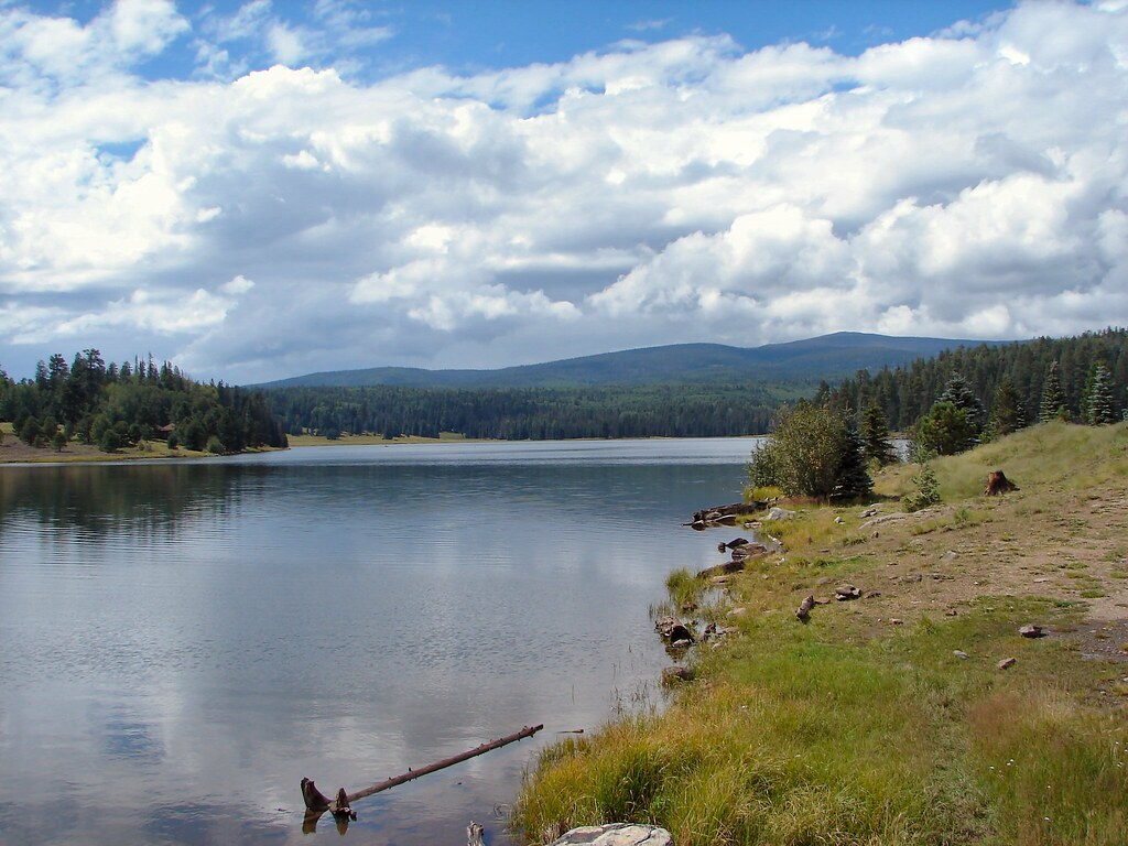 Reservation lake arizona this is a beautiful lake in for White mountain fishing report