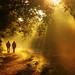 Autumnal morning stroll
