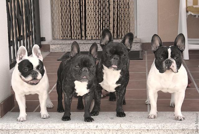 Los cuatro fant sticos de izquierda a derecha frica - Bulldog frances gratis madrid ...