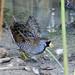 sora-bird-cloisters_1