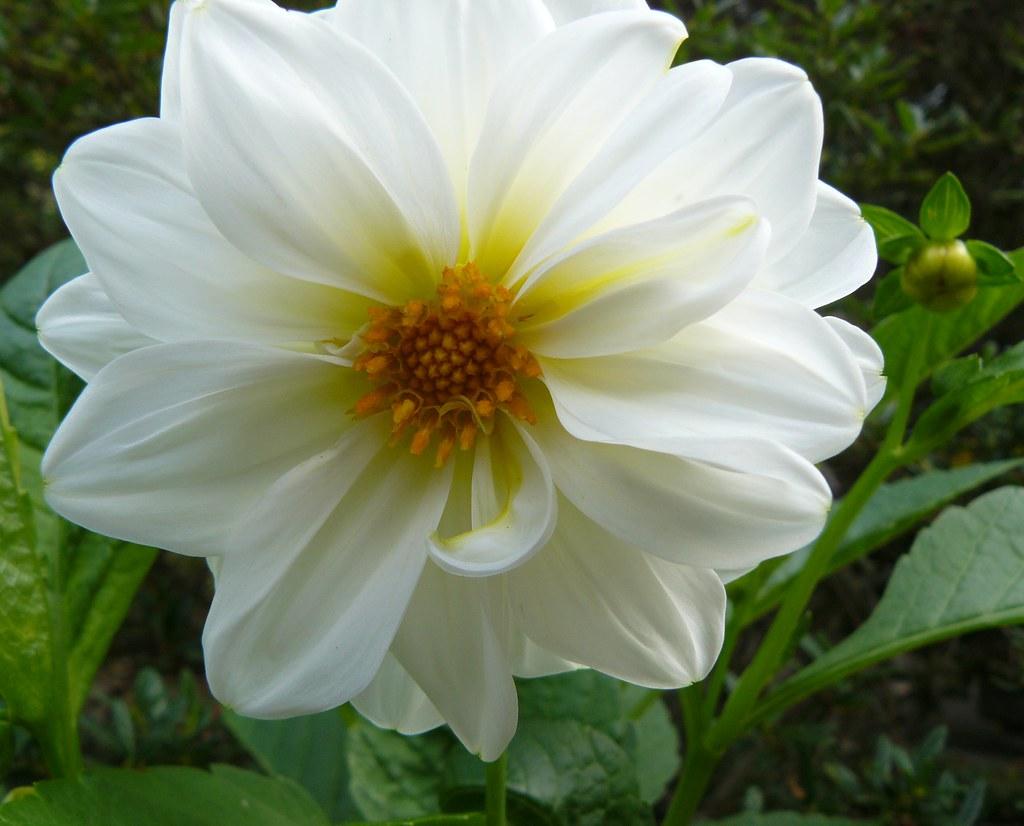 White The Carl S English Jr Botanical Garden At The Ba Flickr