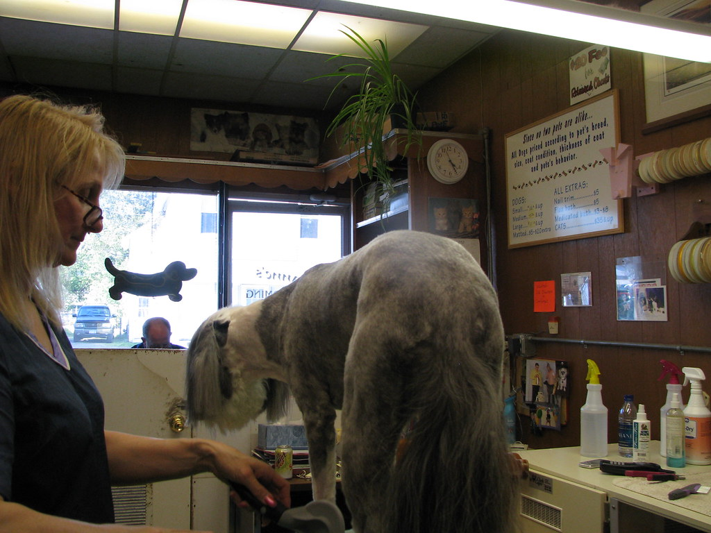 Dog S Grooming  W Bridge St Danville Il