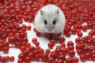 Mitza with redcurrant berries | by Dragan*