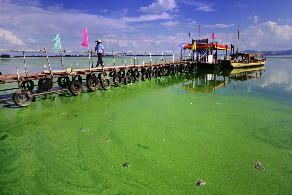Get Free Credit Report >> Algae in Dianchi Lake, China | Photo taken in 2007 of an alg… | Flickr
