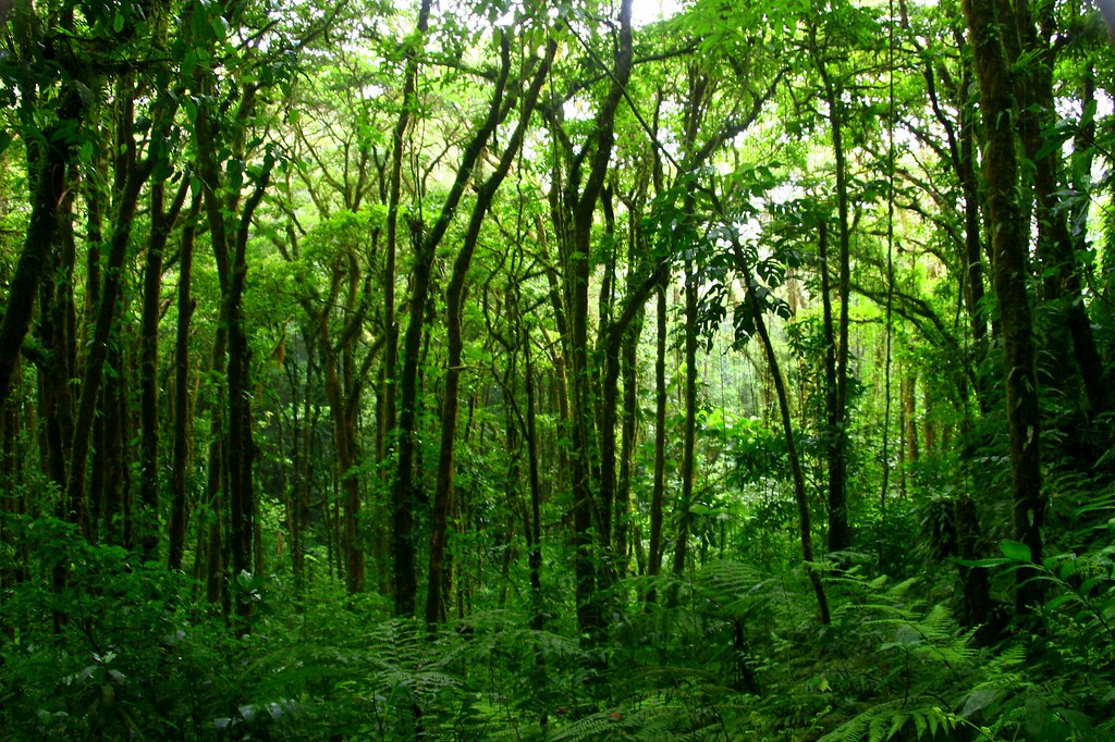Image: Lush forest | Stock photo by JF Maion