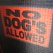 No Dog's Allowed