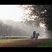 Hyde Park Horses 1