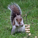 Cyril the squirrel up for a challenge 15:56:37