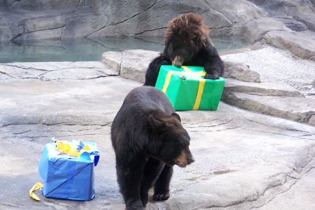 Cleveland Zoos birthday party this photo was taken this s Flickr