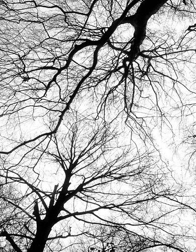 Entangled trees | by killearnan