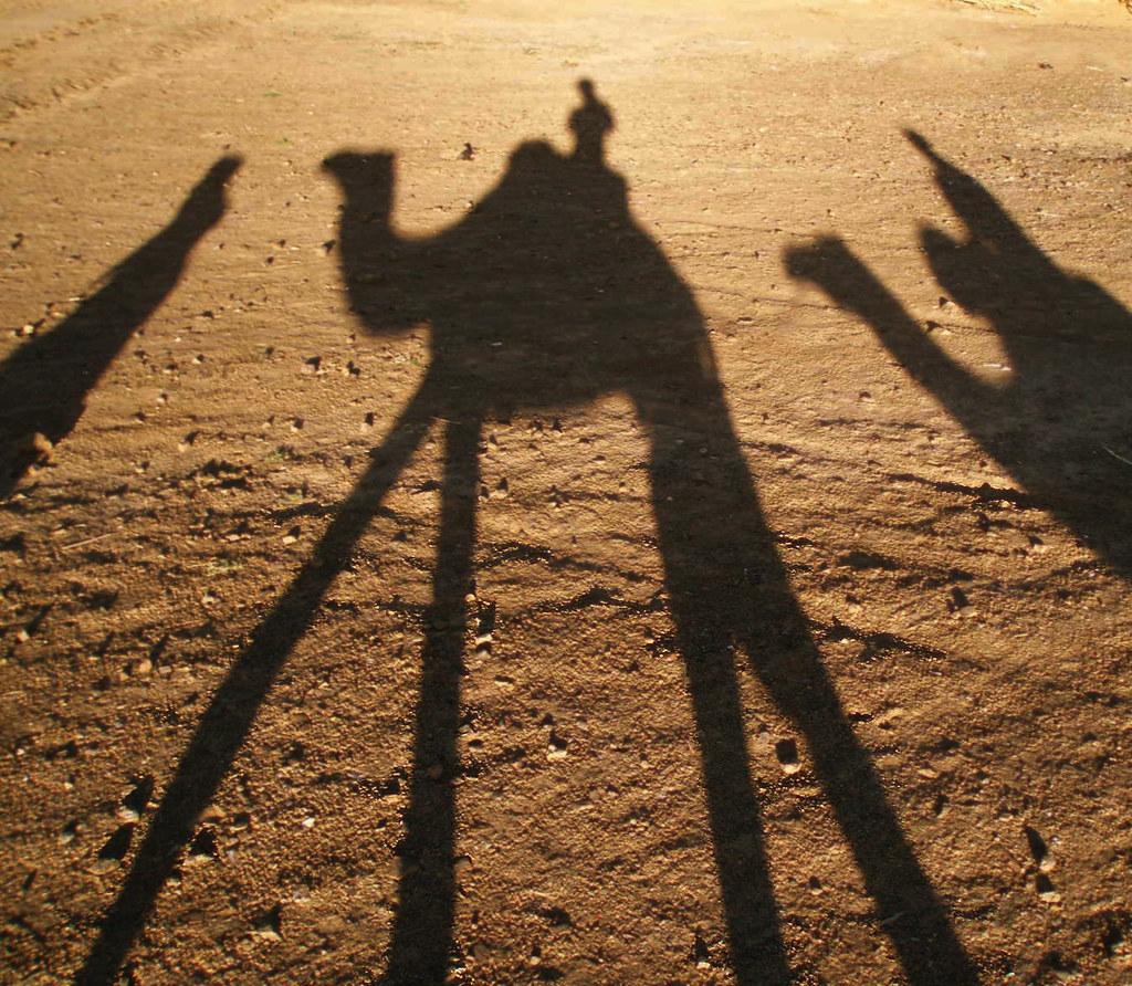 Davis camellos