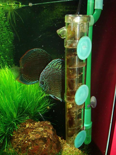 Co2 For Aquarium Plants Diy